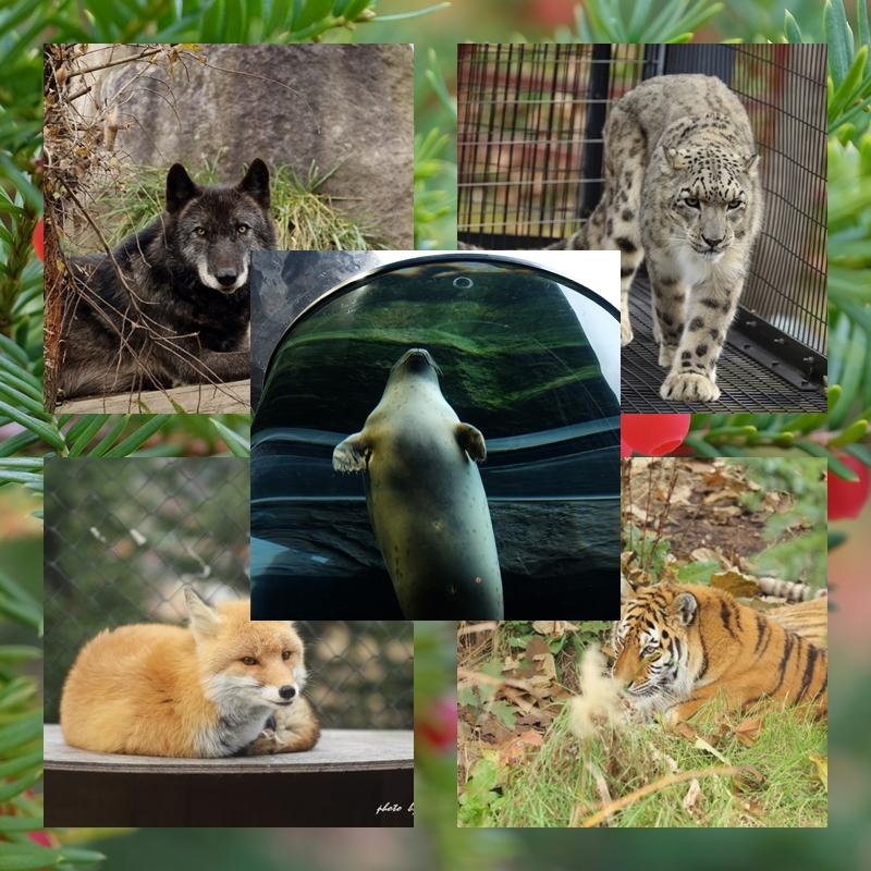 Animalpark_4
